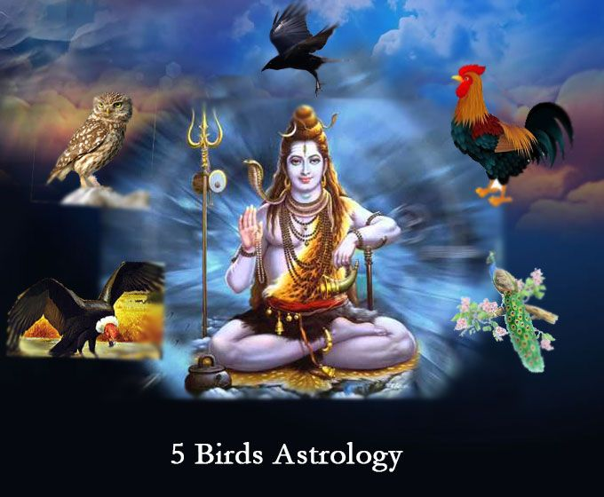 Experienced Traditional Vedic Astrologers Astrology Vedic Astrology Vedic Astrology