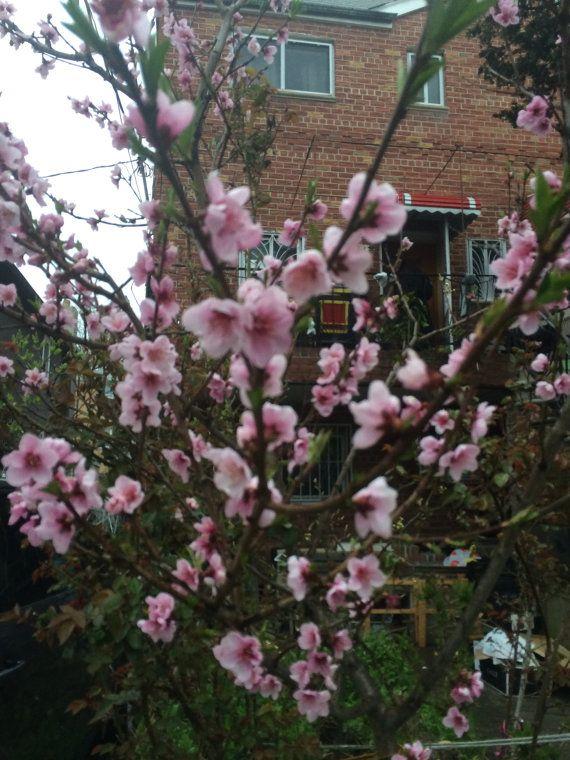 Nectarines cut fruit tree by KnitSew4U on Etsy