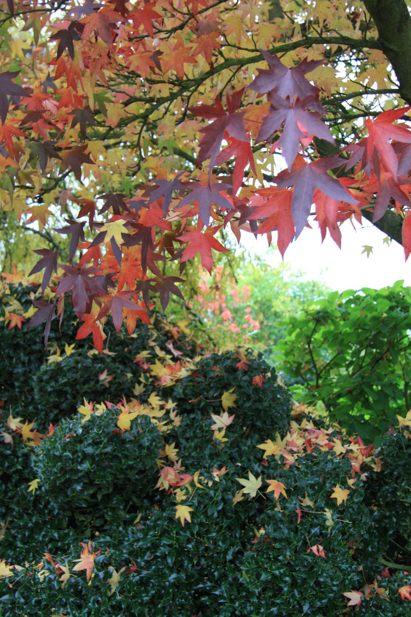 STARRY AUTUMN DAYS | Garden inspiration, Starry, Foliage