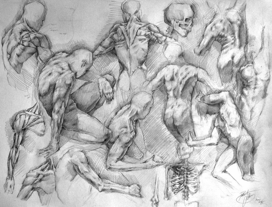 Anatomy Study by TheDeviantDrawer.deviantart.com on @deviantART ...