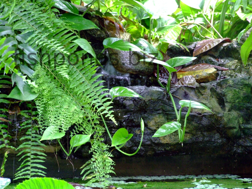 Pretty And Small Backyard Fish Pond Ideas At Decor Landscape Garden Pond  Design Adding Waterfalls To