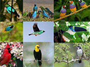 Imagens de Pássaros Galeria 1