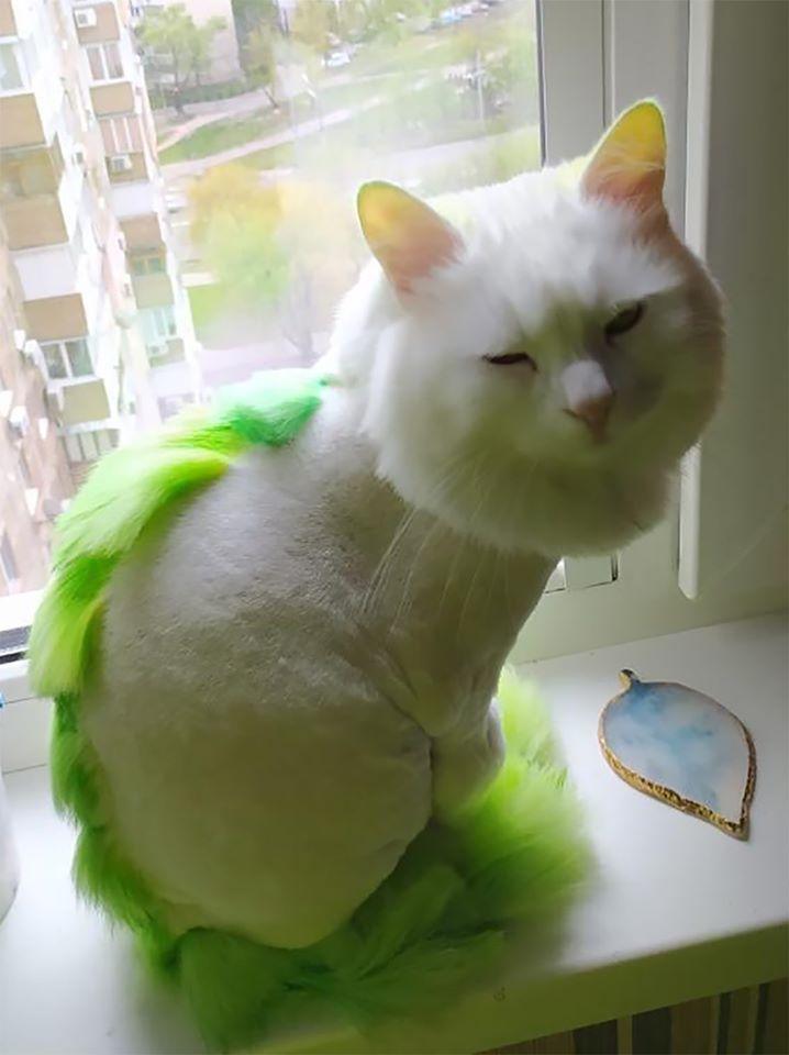 Opawz Semi Permanent Dye In 2020 Dog Cat Cats Cat Grooming
