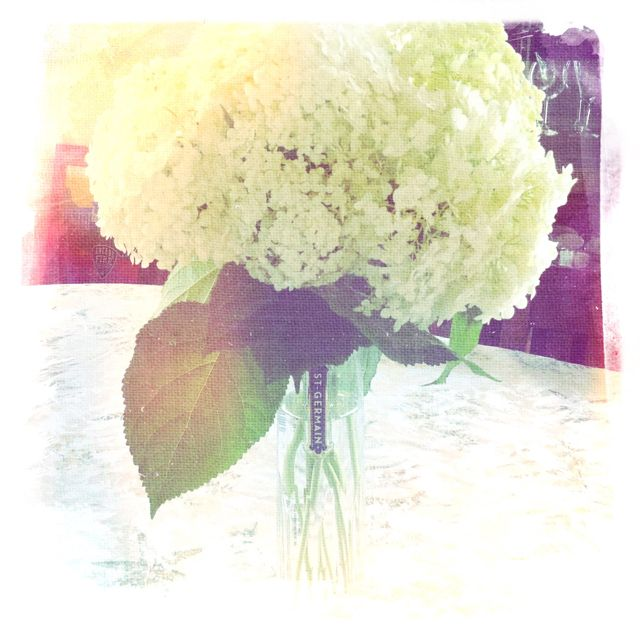 Gorgeous hydrangea - the blooms of summer - in a St-Germain carafe.