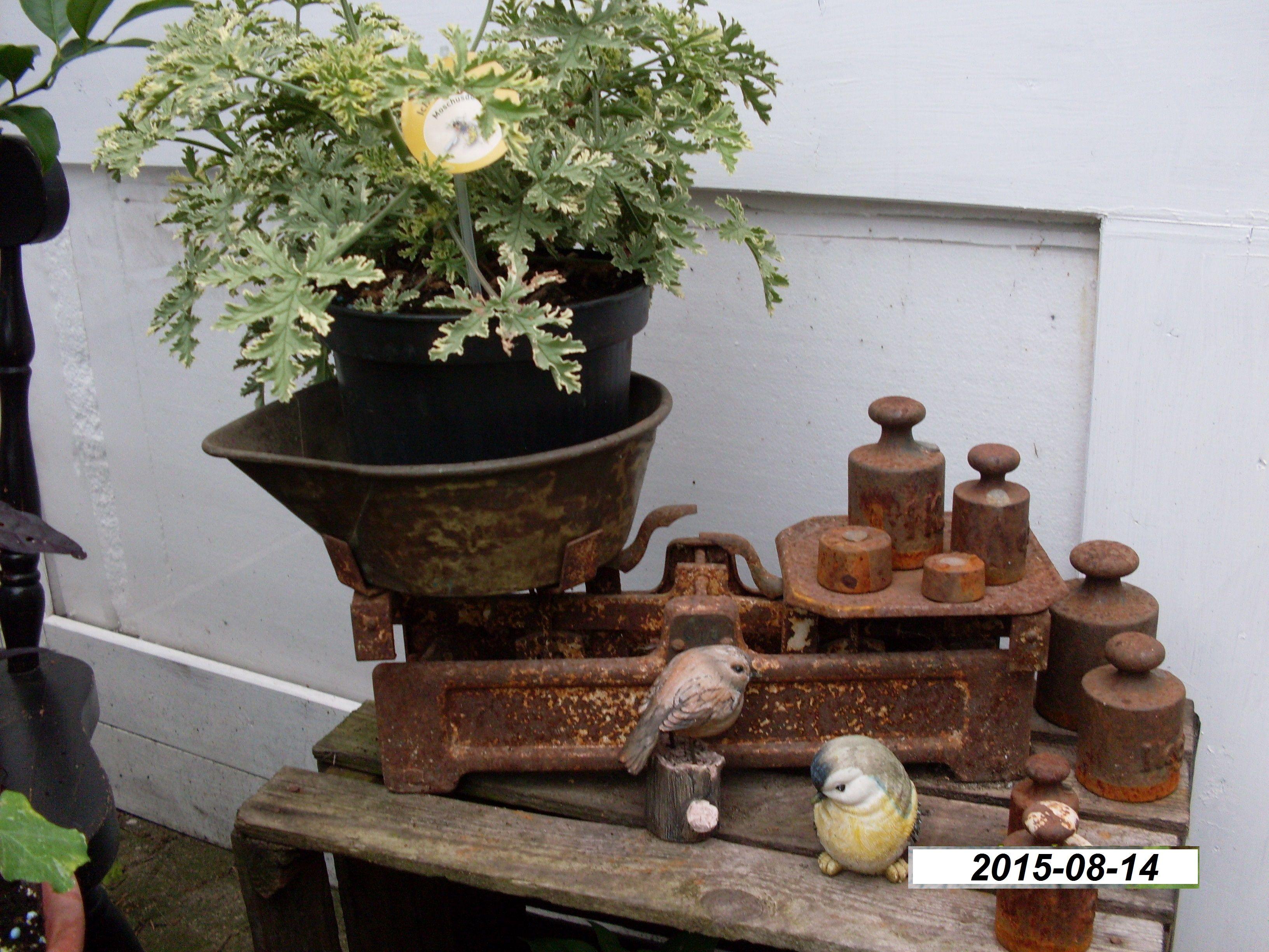 Antike Küchenwaage ~ Alte tellerwaage küchenwaage shabby design vintage