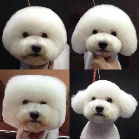 Dog Grooming Styles But Don T Worry We Re Here To Help Read On For Ways To Keep Your Dog S Fur Skin Nails Te In 2020 Dog Grooming Styles Dog Grooming Bichon