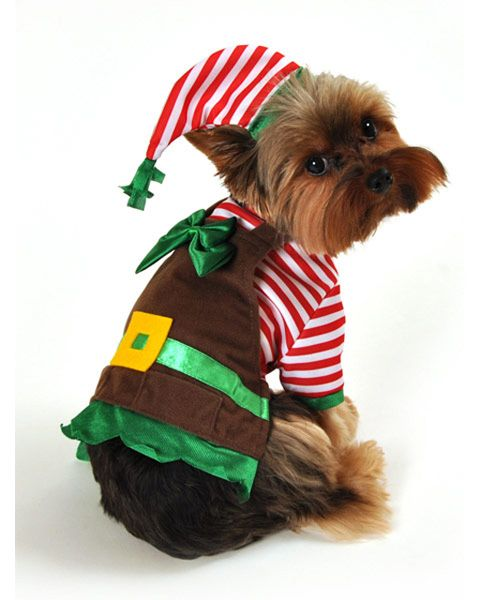 Christmas Outfits for Dogs are so adorable! - Christmas Outfits For Dogs Are So Adorable! Animals In Outfits