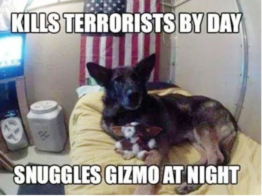 Pin by Pamela McGee on MWD's Dog memes, Service dogs