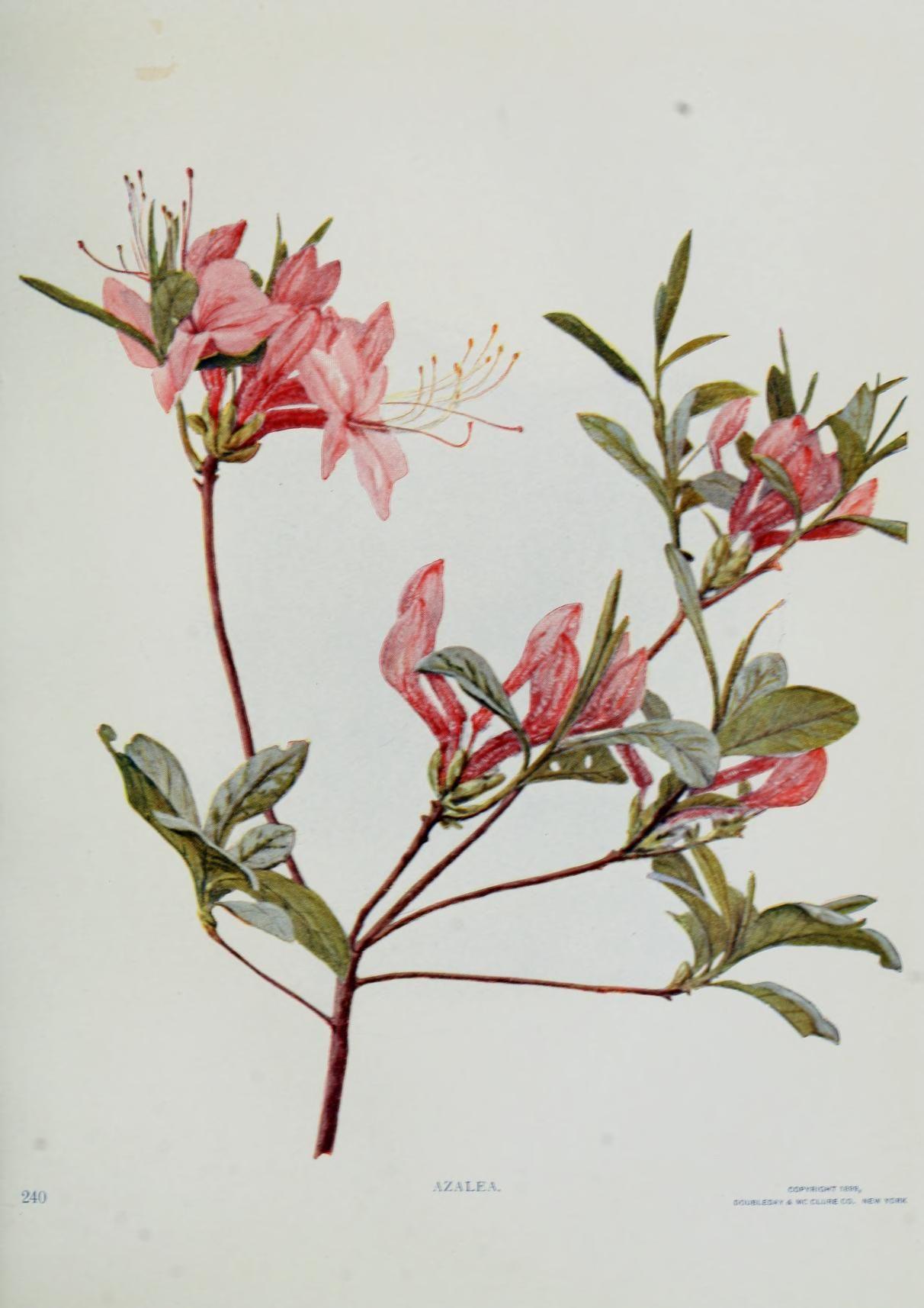 Pin On Botanical Drawings