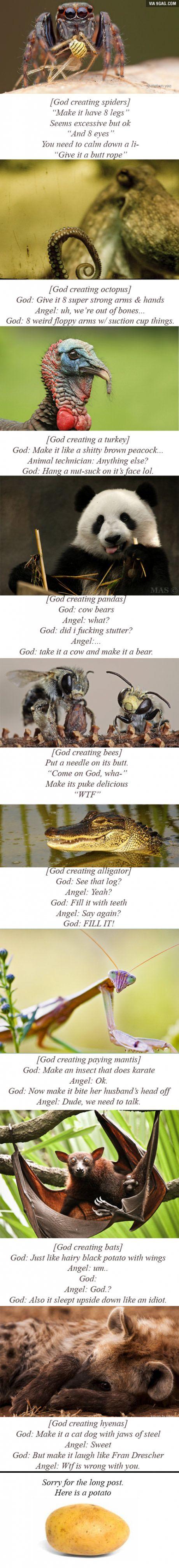 God creating animals.