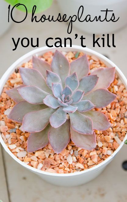 Do your houseplants die? I know I sometimes forget to water them. So these are great, they can survive for some time without water!