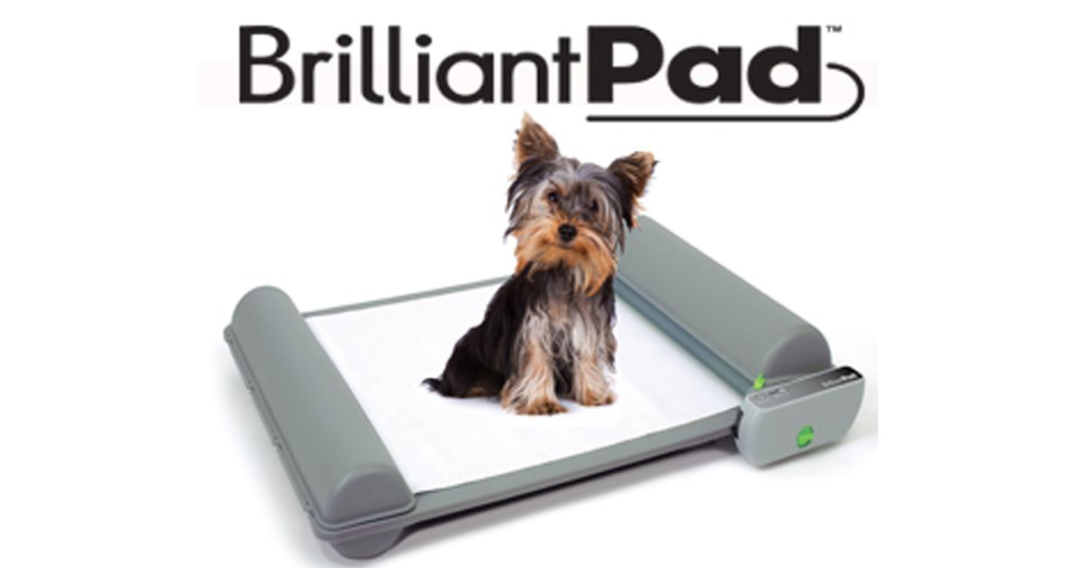 Brilliantpad Is The World S First Self Cleaning Dog Potty That Handles 1 And 2 And Wraps And Seals Waste To Keep Your Home Cle Dog Potty Dog Pads Sweepstakes