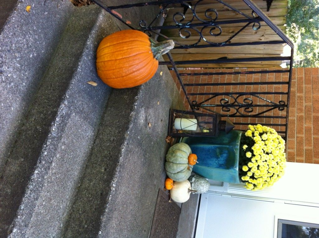 how to stop squirrels from eating my pumpkins