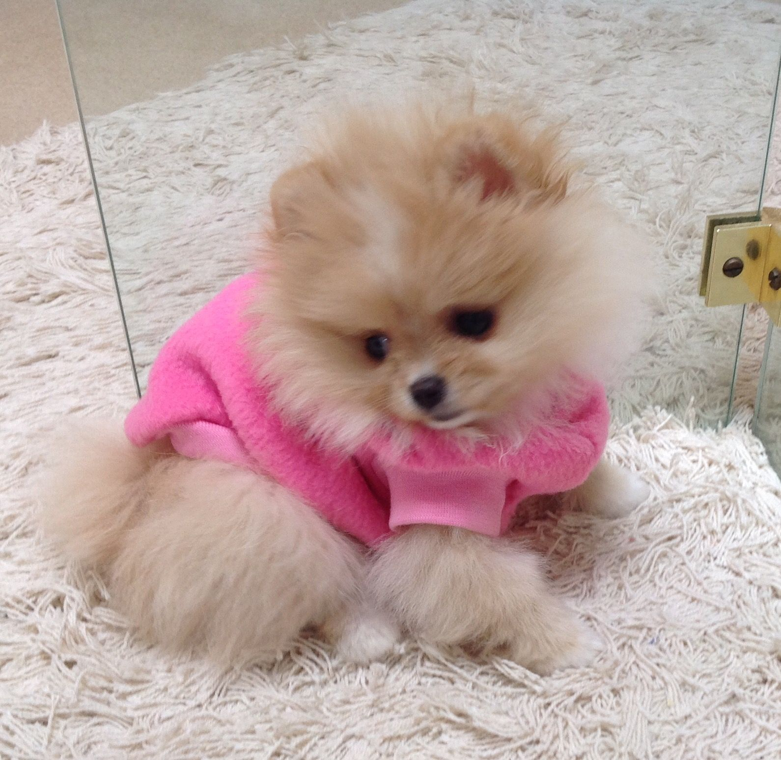 Pin by slade on i love love love poms cute