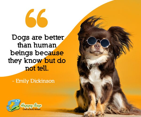 Even If They Don T Tell Still You Must Know When Your Dog Buddy