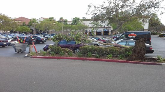 Tree Falls on Car in Parking Lot - Santa Barbara News - Edhat