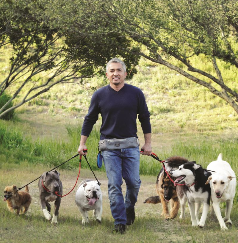 Cesar Millan Will Be At The Norton Center On November 24th Www