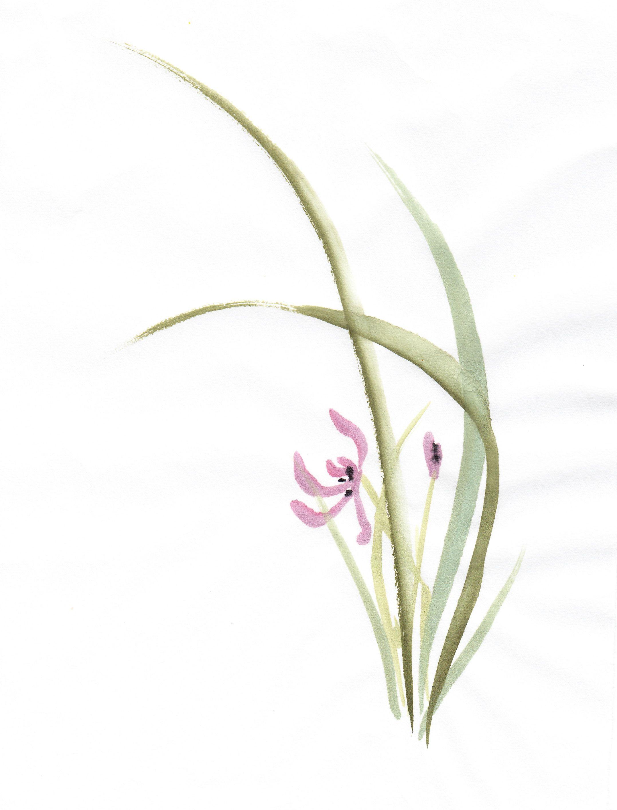 OrchidStudies_0006