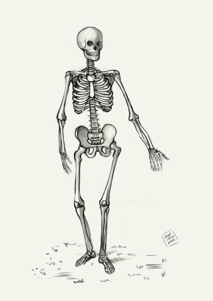Dibujo De Esqueleto Esqueleto Dibujo Esqueleto Mejor Dibujo