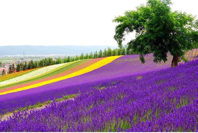 Flower Field <3