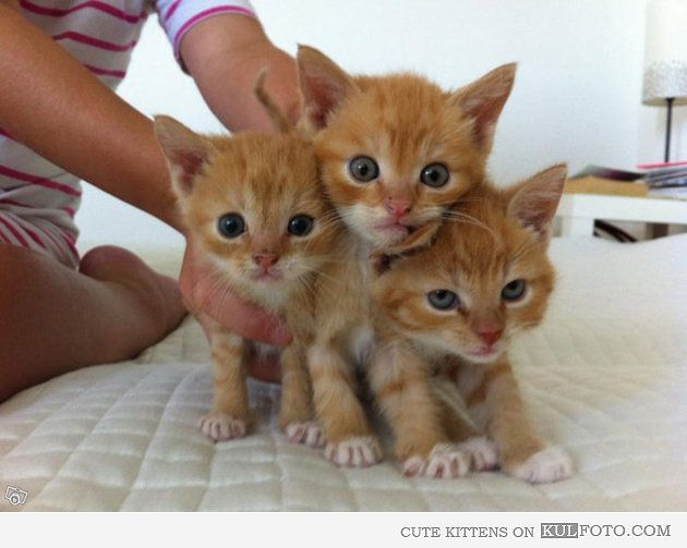 The Three Little Kittens Before They Lost Their Mittens One Pic Fashion Show Games Free Fashion Magazines