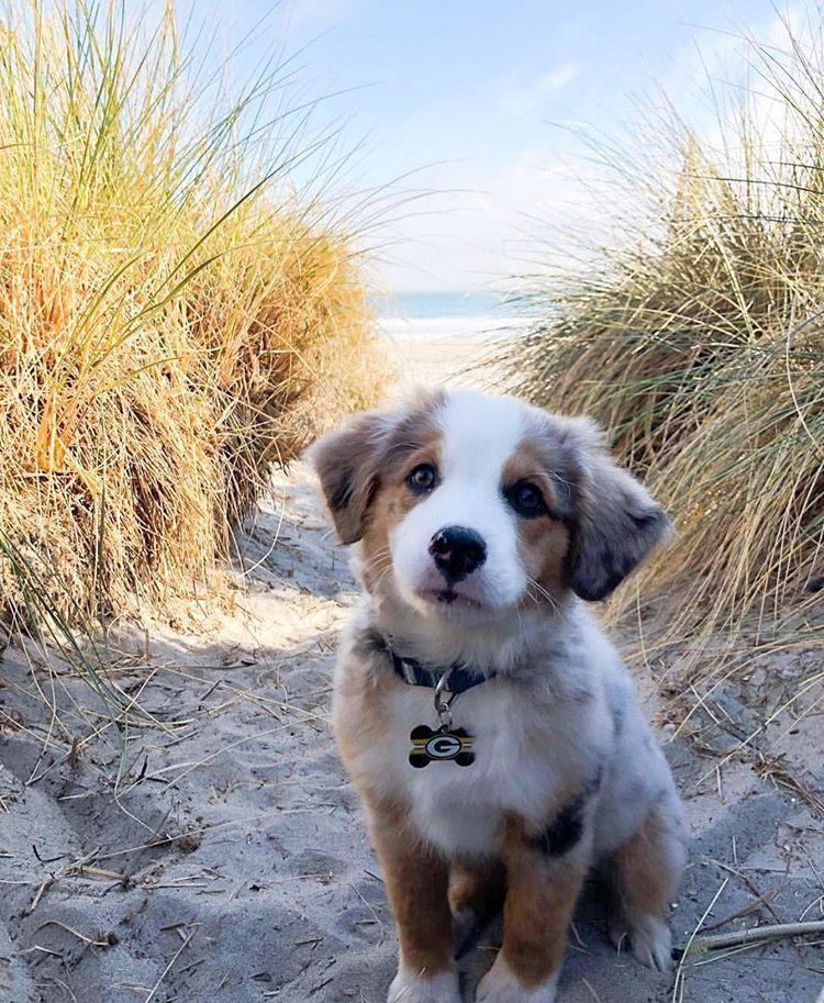 """Photo of Sparklypets en Instagram: """"¡Te encantará ir a jugar con tu cachorro en la playa! ¡Envíenos su lugar de juego favorito! ❤️❤️❤️❤️❤️❤️❤️❤️❤️❤️. … """""""