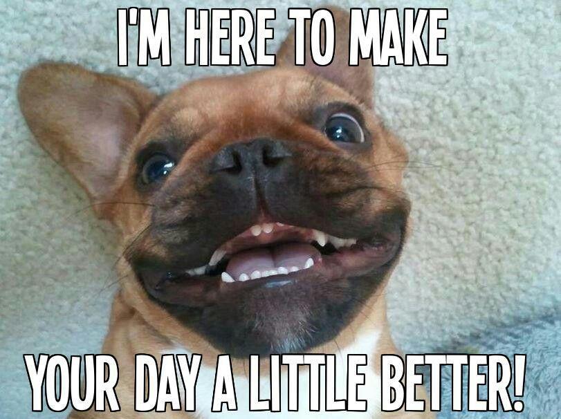 Thank You Happy Animals Silly Animals Dog Gifs
