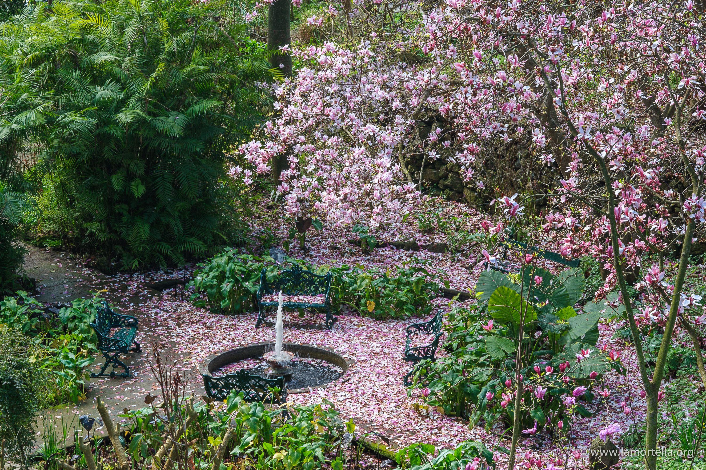 Fiori Piante Giardino Balcone E Terrazzo Idee Arredamento Cose Di Casa Giardino Giardino Mediterraneo Splendidi Giardini