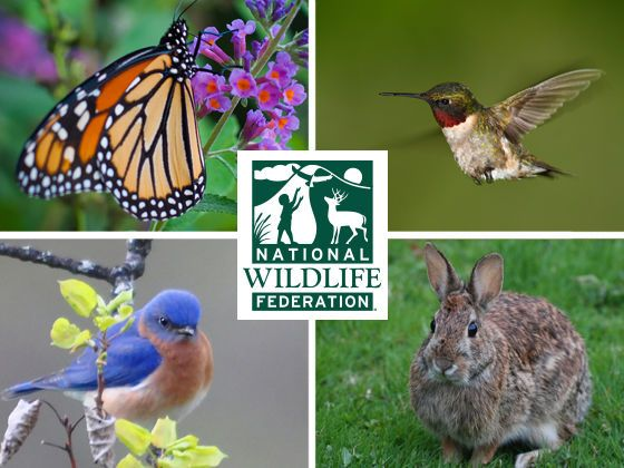 Which Backyard Wildlife Species Are You?