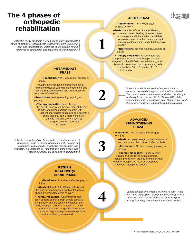 The 4 Phases Of Orthopedic Rehabilitation Dvm360 Com Orthopedics Rehab Nursing Physical Therapy Education
