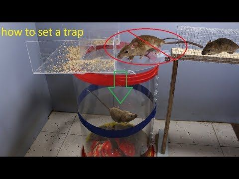2019 smartest mouse trap / classic mouse trap made from the best plastic container / Best mouse trap