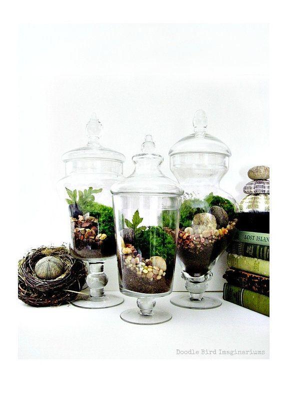 Large Decorative Jars Interesting Terrarium Set 3 Large Decorative Apothecary Jar Terrariums Design Inspiration