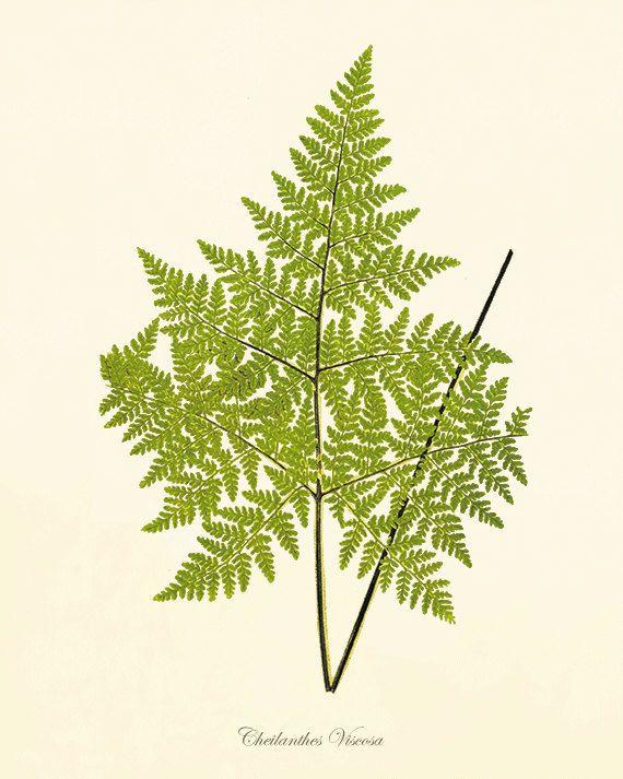 Fern art print Vintage Botanical Art Prints Home Decor Wall Art ...