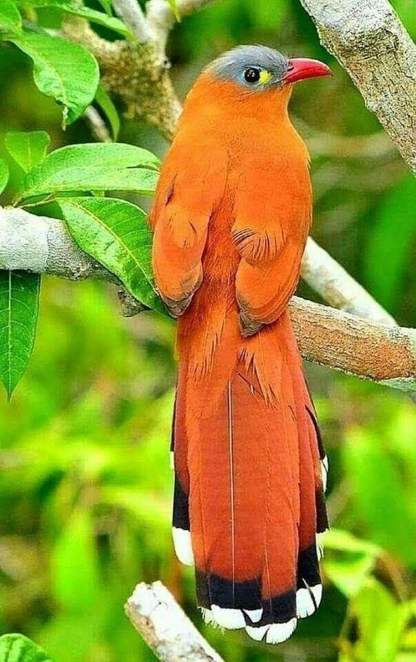 Pin By Gonzalo Solano Barquero On Cute Birds Beautiful Birds Nature Birds Pet Birds