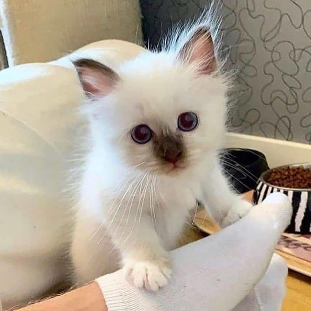 Kittens Kitten Lovers Kitten Pictures Adorable Kitten Pictures Cutest Kitten Pictures Cute Kittens Baby Kittens Cutest Cute Baby Animals Cute Cats