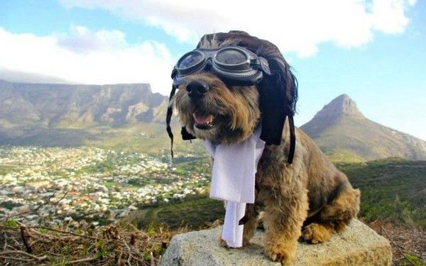 Blog Bicho Integral: Kit de Emergência Natureba para Cães e Gatos