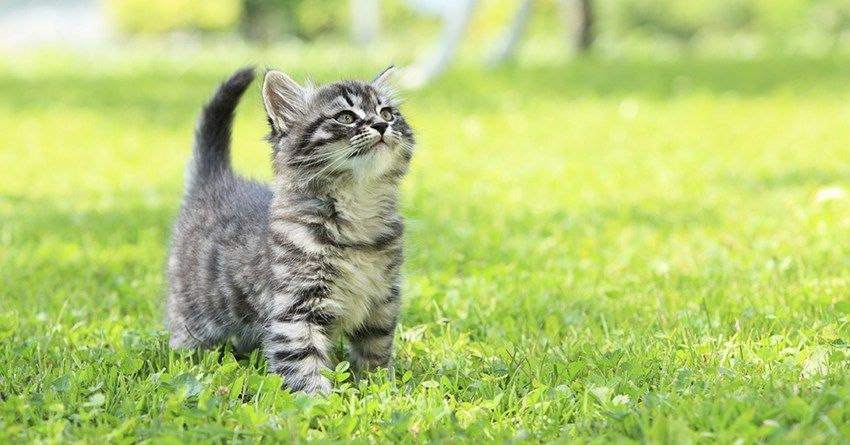 8 Foods To Feed Your Kitten Her First Year With Images Kittens Cats Pets