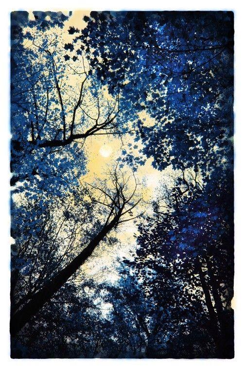China blue, Delft blue, tree art, blue decor, navy blue, moon art,11x17, Original, Fine Art photograph, full moon, nature decor, art on Etsy, $99.00