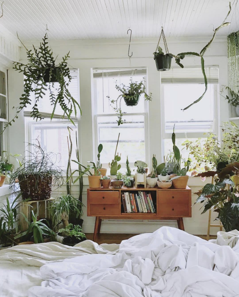 7 Ways To Style House Plants is part of Ways To Style House Plants Urban Outfitters Blog - Plants add vibrancy, life and serenity to any room  Bring your place to life with our top tips on how to style your botanicals…