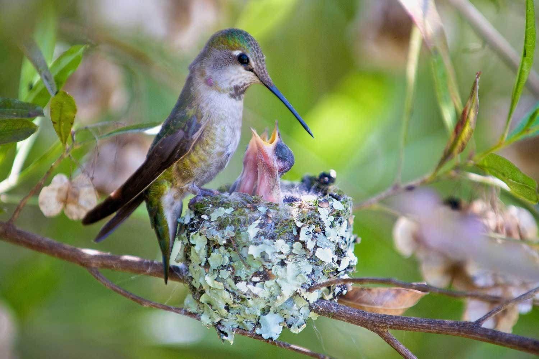 Pin on HUMMING BIRDS