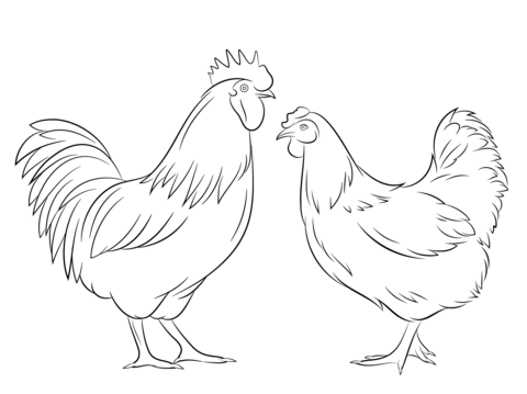 Rooster and Hen Coloring page Coloring Pages Pinterest Hens