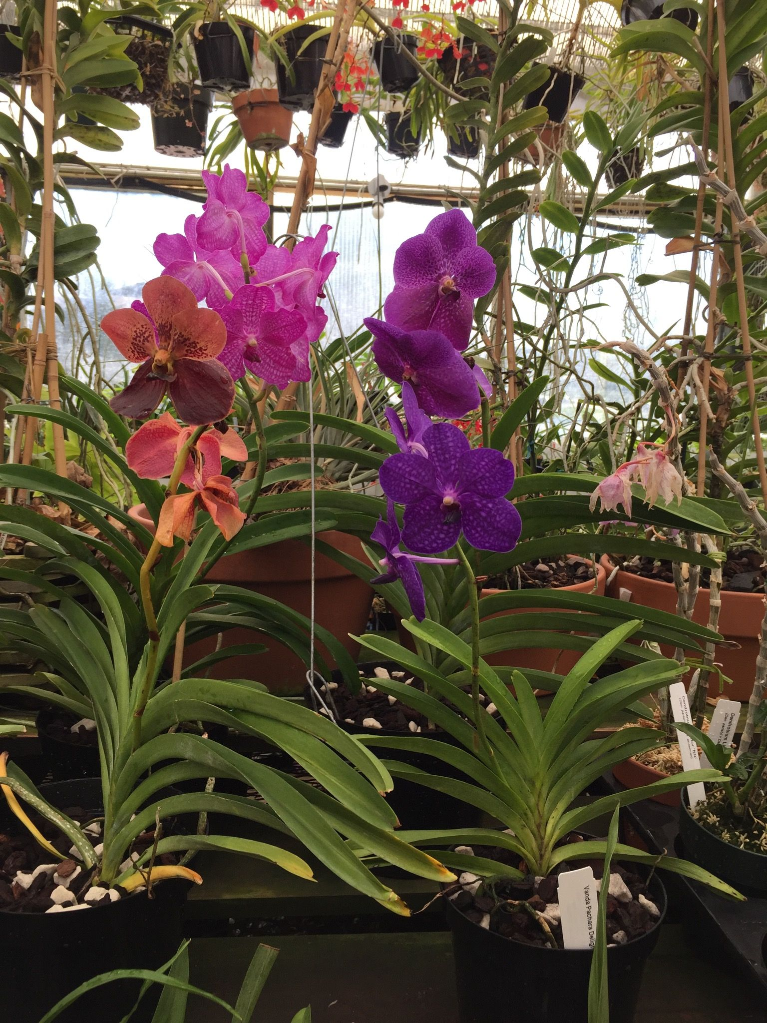 Orchids Limited. Plymouth,MN | Orchids/Plants/Flowers | Pinterest ...