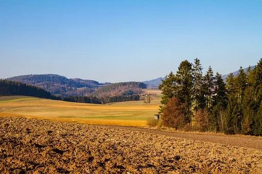 súlycsökkentő erdő)