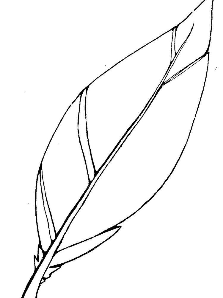 Simple Feather Coloring Page di 2020 (Dengan gambar)