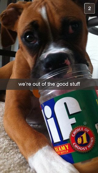 26 Snapchats From Your Dog Boxer Dogs Boxer Dogs Facts Funny