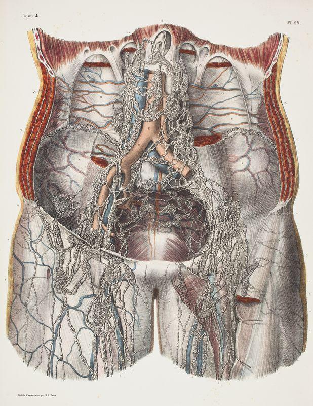 Anatomical plate Traité complet de l\'Anatomie de l\'Homme.Vols. I ...