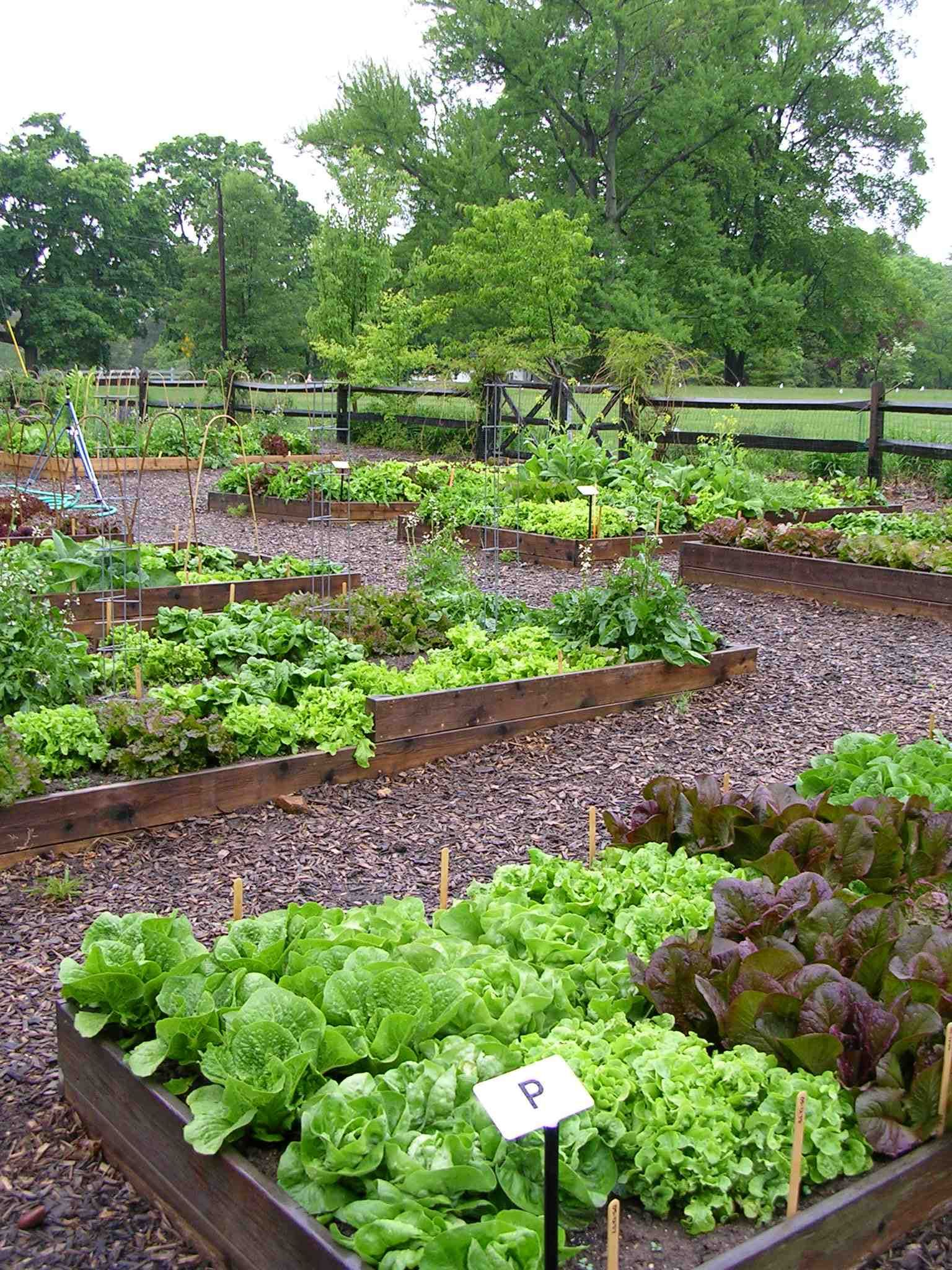 growing greens in the kitchen garden designs and recipes for cooks who love to garden www on kitchen garden id=13741