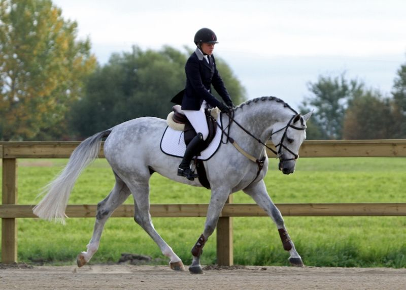 This rider seems to me to have her horse a bit too collected , I like to see the horse using its back end but having a free head set....