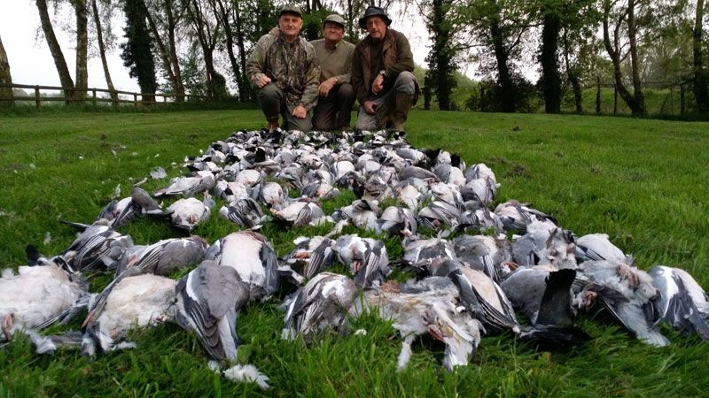 Pigeon Shooting – Know Your Ground