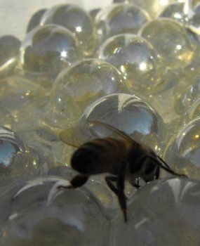 How to Make a Safe Watering Hole for Bees   Make: